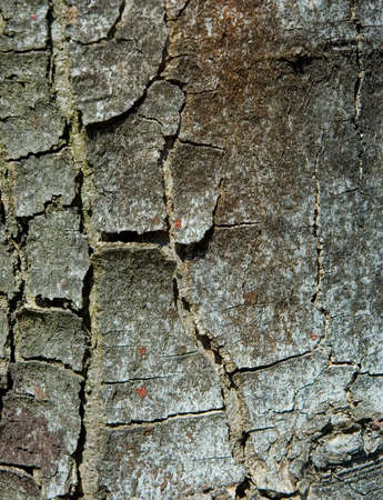 Detail of a tree crust. Natural texture. Stock Photo - 918760