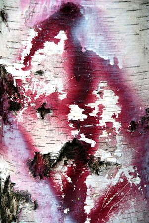 Texture of a birch bark with a pink grafitti on it Stock Photo - 1149225