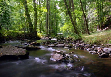 Mountain creek in the forest with long exposure Stock Photo - 1545695