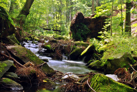 Mountain creek in the forest with long exposure photo