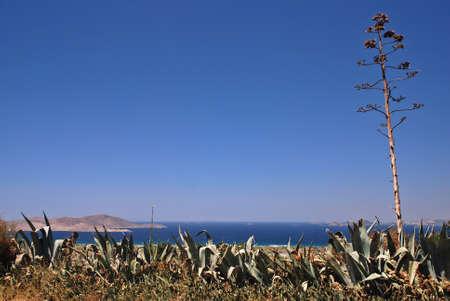 Greek islands, sea and agave americana  photo