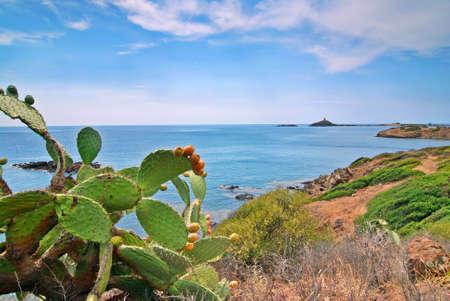 Opuntia cactus and a coast of Sardinia with a island and lighthouse