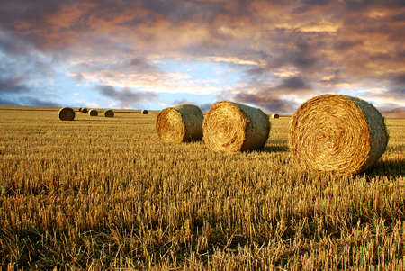 Field after harvest and dramatic sky during sunset photo