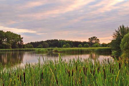 pantanos: Estanque con ca�a y bulrush puesta de sol de la tarde  Foto de archivo
