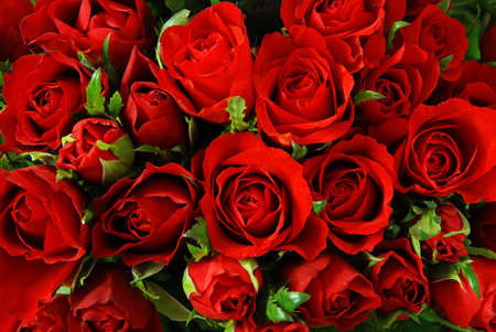 propose: Red roses background - natural texture of love