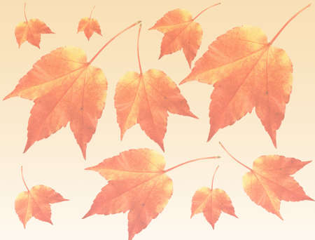 warmly: Autumn  fall warmly colorful leaves transparent background
