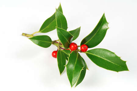 christmas berries: Christmas decoration - isolated holly with berries on the white