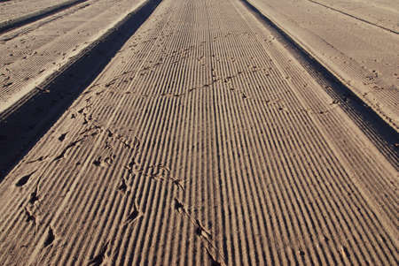 interrupt: After raking the sand of beach the pattern was demaged by birds