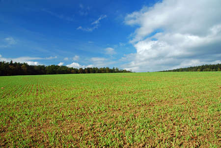 Early spring field with green grass and blue sky Stock Photo - 2323698