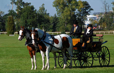 horse carriage: Two Horse carriage with two coachmen
