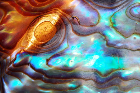 pearl shell: Macro of sea shell - curves and layers are covered with pearl, with golden glitter in the light - great for background Stock Photo