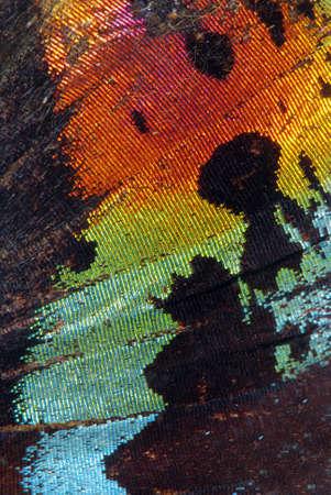 Super Makro Foto von wunderschönen Schmetterling Flügel mit vielen Farben und Venen  Standard-Bild - 2691251