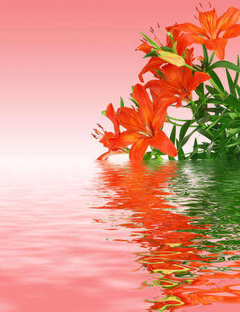 Beautiful red blooming lilies with green leaves on ping background reflecting in the water