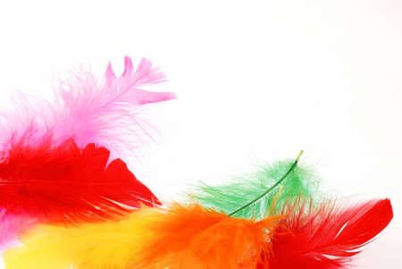 white feather: Bello morbido piume di diversi colori di sfondo creare allegra