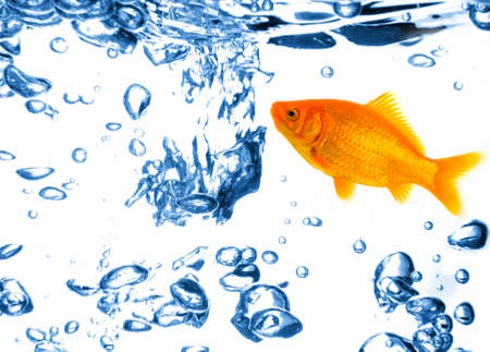 Small goldfish in fresh blue water full of air bubbles photo