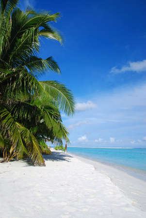 Beautiful tropical beach with turquoise sea, white sand and palm photo