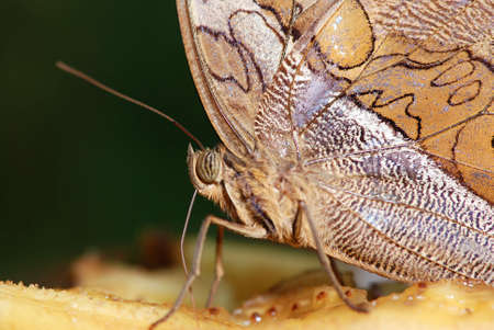 Macro of a tropical butterfly with blurred background Stock Photo - 3331272