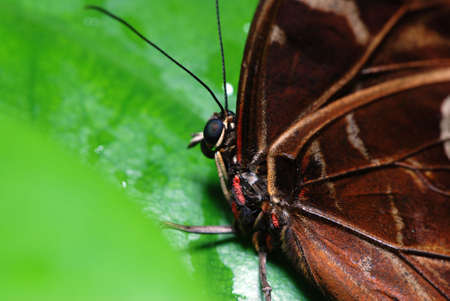 Detail of a beautiful tropical butterfly sitting on a green leaf. Shallow DOF Stock Photo - 3330414