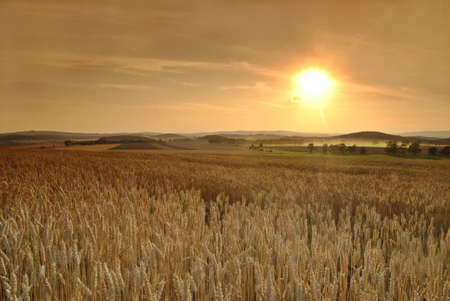 Sun is setting over the field of wheat Stock Photo - 3747602