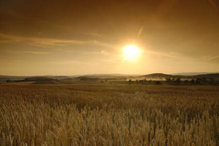 Sun is setting over the field of wheat Stock Photo - 3747599