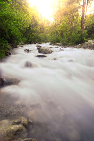 alpen: Beautiful wild alpen brook with long exposure at sunset with vegetation in the background