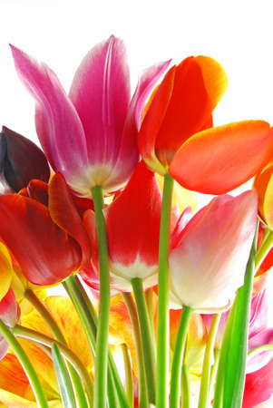 Bunch of beautiful spring flowers - colorful tulips against white background photo