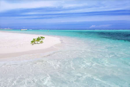 green vegetation: Beautiful tropical crystal clear sea with sandy beach and green vegetation