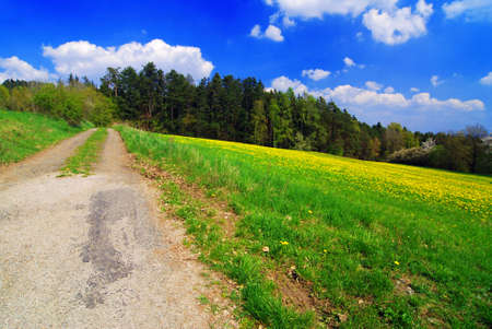 panoramatic: Beautiful spring landscape with blooming yellow dandelions