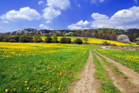 Beautiful spring landscape with blooming yellow dandelions Stock Photo - 4717767