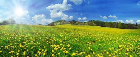 タンポポの草原と輝く太陽で撮影した美しい春パノラマ 写真素材