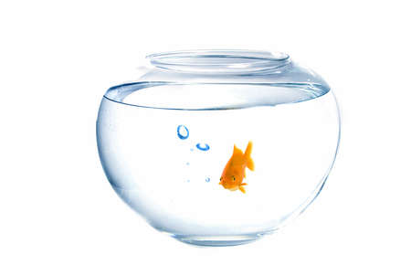 Small goldfish in a fish tank with bubbles of air photo