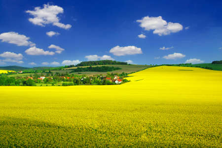 Beautiful rural landscape with blooming rape, village and a blue sky