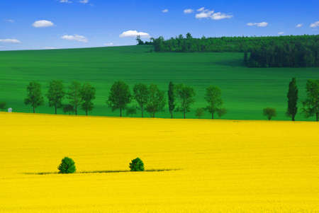 Beautiful spring landscape of three colors - yellow rape, green wheat and a blue sky photo