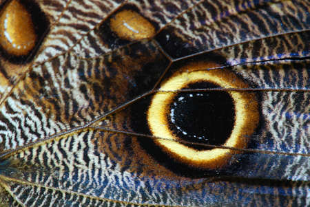 macro animals: Detailed macro of tropical butterfly wing Stock Photo