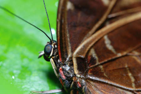 Detail of a beautiful tropical butterfly sitting on a green leaf. Shallow DOF Stock Photo - 5513711
