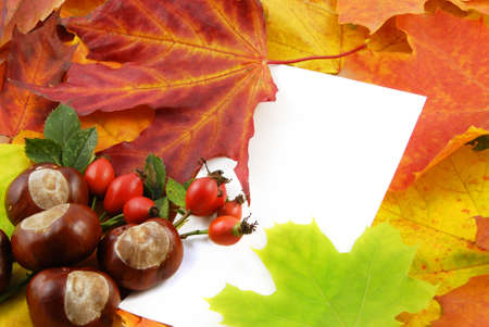 Colorful autumn background with maple leaves and white card Stock Photo - 5726192