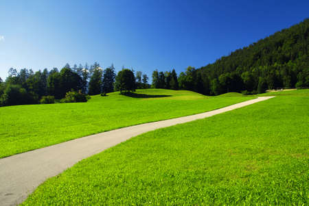 Beautiful alpine meadow with green grass with the road and forest photo