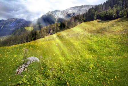 Beautiful alpine meadow with meadows and sun rays Stock Photo - 5814011