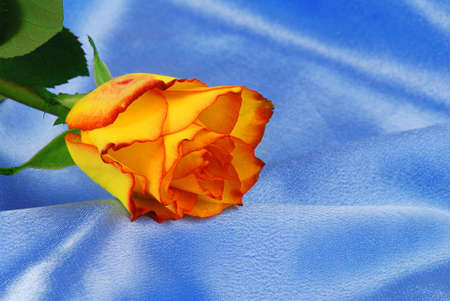 Beautiful orange rose is laying on blue satin - good for anniversary or Valentine photo