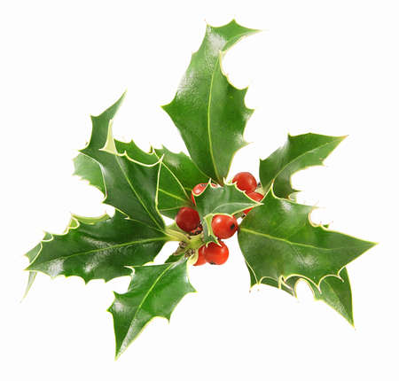 holly berry: Christmas decoration - isolated holly with berries on the white