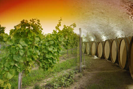 Old wine cellar with barrels and path blended with landscape of sunset over vineyard photo