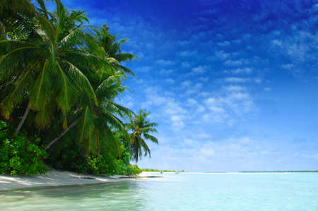 Beautiful tropical beach with turquoise sea, white sand and\ palm