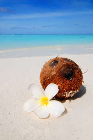 Coconut with a white flower laying on a beautiful tropical beach in the Maldives photo