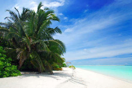 Hermosa playa tropical con mar azul turquesa, arena blanca y palmeras