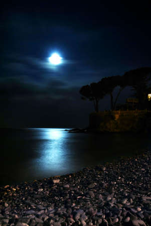 Moon is shining over the calm sea. Silhouette of trees are visible photo