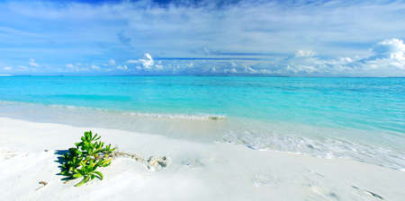 Tropical paradise in Maldives with white beach, vegetation and turquoise sea - panorama photo