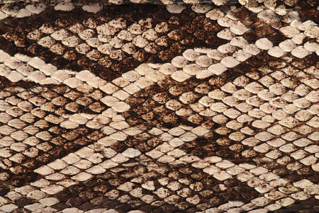 rattlesnake: Detail of a real skin of a snake with scales pattern Stock Photo