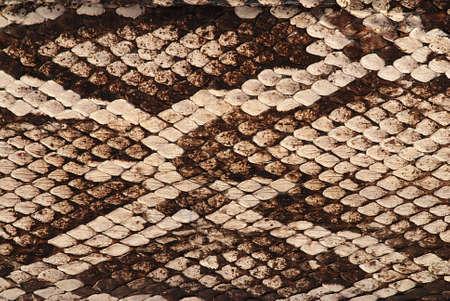 serpiente de cascabel: Detalle de una piel real de una serpiente con patr�n de escalas