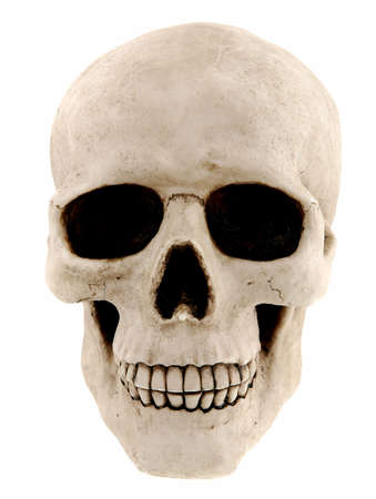 Human skull isolated on a white background photo