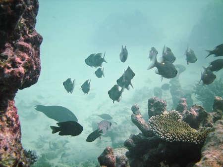 Tropical fish kingdom - coral reef in the maldivian sea photo